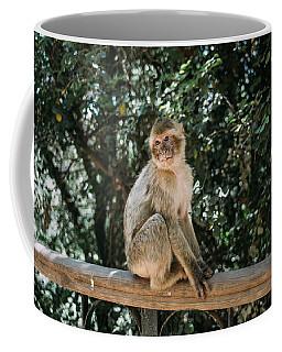 Barbary Macaque Sitting Coffee Mug