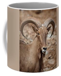 Barbary Sheep Portrait Coffee Mug