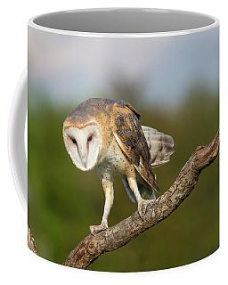 Coffee Mug featuring the photograph Barn Owl 5151801 by Rick Veldman