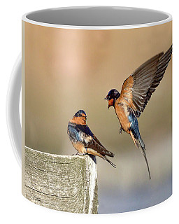 Barn Swallow Conversation Coffee Mug