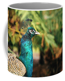 Beautiful Colourful Peacock Outdoors In The Daytime. Coffee Mug