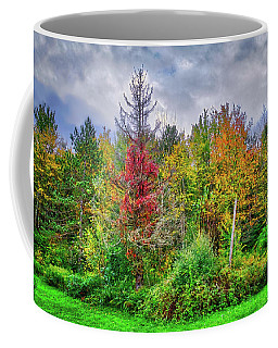 Coffee Mug featuring the photograph Beauty In The Fall Forest by Lynn Bauer