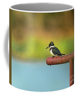 Belted Kingfisher On Rail Coffee Mug