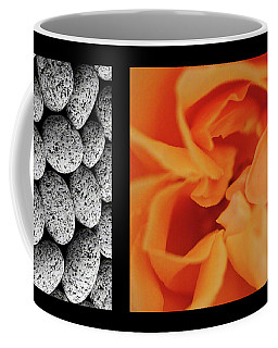 Coffee Mug featuring the photograph Bento Box 4 by Mark Shoolery