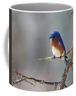 Big Meadows Early Spring Bluebird Coffee Mug