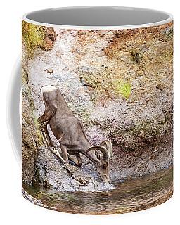 Bighorn Sheep Drinking From Lake In Summer Coffee Mug