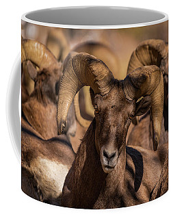 Bighorns Resting In The Afternoon Sun Coffee Mug