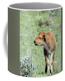 Bison Calf In Lamar Valley Coffee Mug