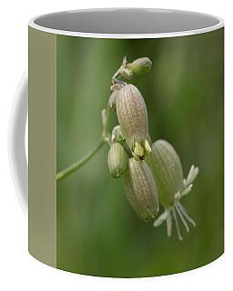 Blaasjeskruid Close-up Coffee Mug