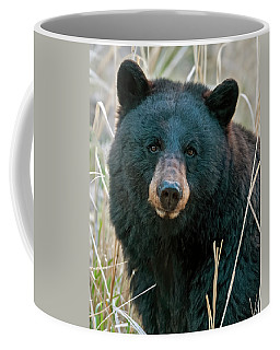 Black Bear Closeup Coffee Mug