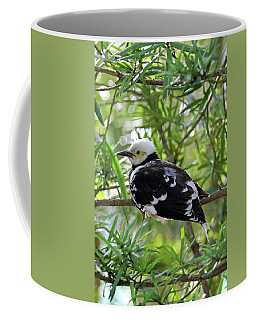 Black Collared Beauty Coffee Mug