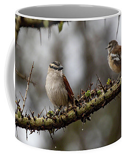 Black-crowned Tchagra And White-browed Scrub-robin Coffee Mug