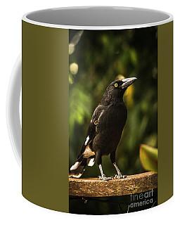 Black Currawong Bird Coffee Mug