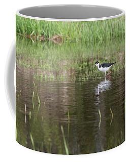 Black-necked Stilt 2018-1 Coffee Mug