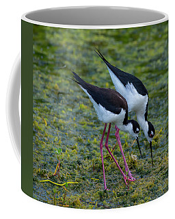 Black-necked Stilts Coffee Mug