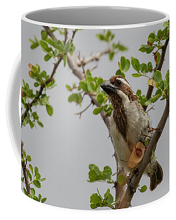 Black-throated Barbet Coffee Mug