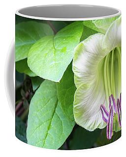 Blooming Liana - A Singular Exotic Flower Coffee Mug