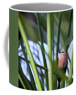Coffee Mug featuring the photograph Blue-bellied Roller by Whitney Goodey