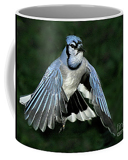 Coffee Mug featuring the photograph Blue Jay by Debbie Stahre