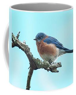 Blue On Blue Eastern Bluebird Coffee Mug