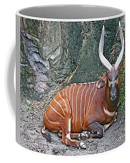 Coffee Mug featuring the photograph Bongo by PJ Boylan