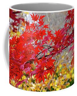 Brilliant Fall Color Coffee Mug