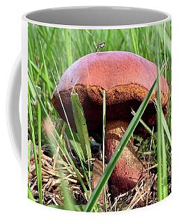Bug On Boletus Edulis Coffee Mug