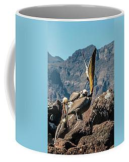 California Brown Pelicans In Ilsa Danzante Harbor Coffee Mug