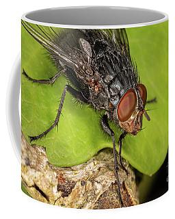 Calliphora Vincina Coffee Mug