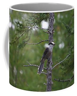 Coffee Mug featuring the photograph Canada Jay 101305 by Rick Veldman