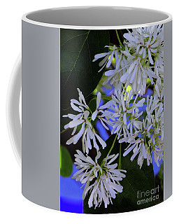 Coffee Mug featuring the photograph Carly's Tree - The Delicate Grow Strong by Rick Locke