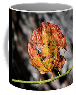 Coffee Mug featuring the photograph Carved Pumpkin Leaf At Gordon's Pond by Bill Swartwout Fine Art Photography