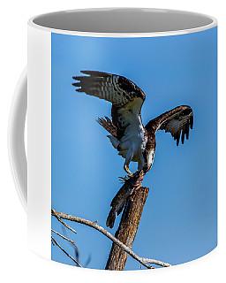 Catfish, My Favorite Coffee Mug