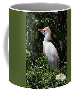 Cattle Egret With Breeding Feathers Coffee Mug
