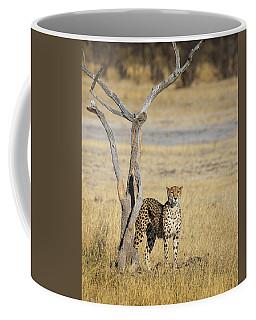 Coffee Mug featuring the photograph Cheetah by John Rodrigues