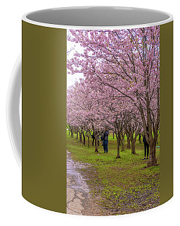 Cherry Blossoms 3 Coffee Mug