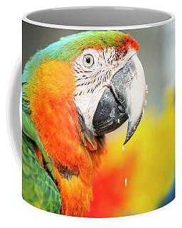Close Up Of The Macaw Bird. Coffee Mug