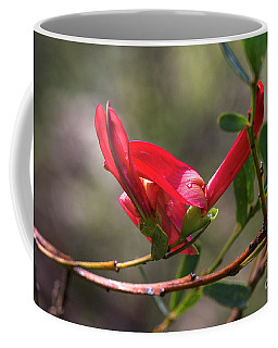 Cockies Tongue Templetonia Retusa Coffee Mug