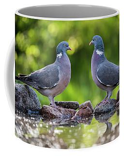 Common Wood Pigeons Meeting At The Waterhole Coffee Mug