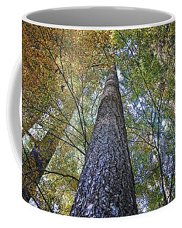 Cones In The Canopy Coffee Mug