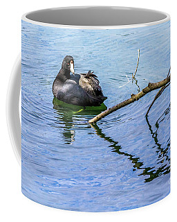 Coot With Branches Coffee Mug