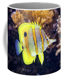 Copperband Butterfly Fish Coffee Mug