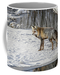 Coffee Mug featuring the photograph Cross Fox Posing by Ronnie and Frances Howard