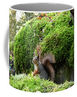 Curious Squirrel Coffee Mug