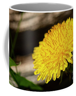 Dandelion In Bloom Coffee Mug