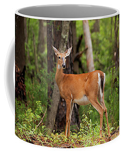 Doe, A Deer, A Female Deer Coffee Mug