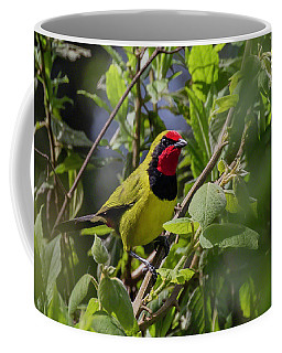 Doherty's Bushshrike Coffee Mug