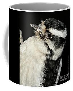 Downy Woodpecker Female Coffee Mug