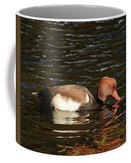 Duck On Water Coffee Mug