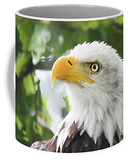 Bald Eagle Perched In A Tree Coffee Mug